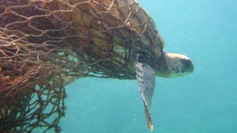 GHOST FISHING: Derelict fishing nets have turned the sea into a death trap for ocean species | OUR OCEANS NEED US | Scoop.it