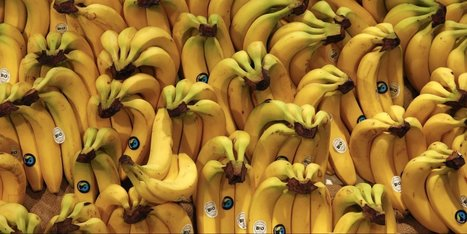 Bananas give you more radiation exposure than living next to a nuclear power plant   Dislearning Desapprentissage Desaprendizaje   Scoop.it