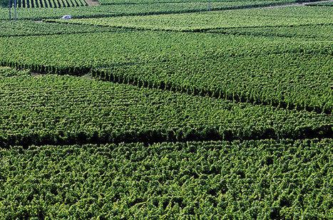 Chinese food giant buys Bordeaux wine estate | Vitabella Wine Daily Gossip | Scoop.it