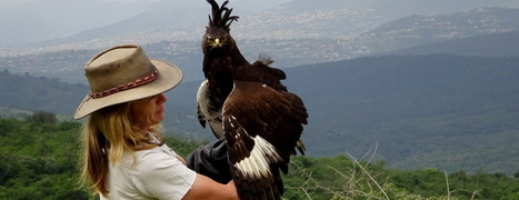 Why we visit the African Bird of Prey Sanctuary ever year | Wildlife Conservation: People and Stories | Scoop.it
