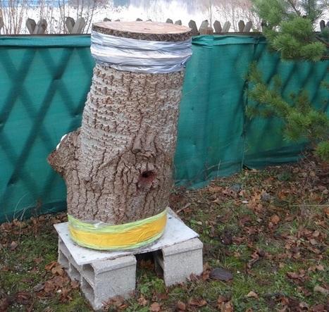 Le sauvetage de la ruche tronc | Variétés entomologiques | Scoop.it