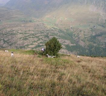 Lannemezan. La zone de montagne s'ouvre aux chasseurs ce dimanche - La Dépêche | Vallée d'Aure - Pyrénées | Scoop.it