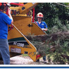Blueys Tree Removals