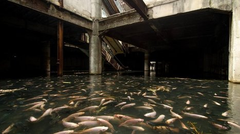 An abandoned mall in Bangkok has been overtaken by fish | In Today's News of the Weird | Scoop.it