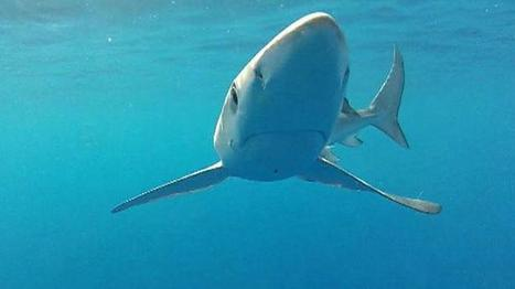 Greens celebrate shark finning victory | All about water, the oceans, environmental issues | Scoop.it