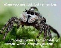Jason Dale on Twitter | Spiders | Scoop.it