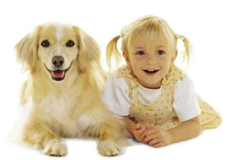 Converging with Canines: Are Humans and Dogs EvolvingTogether? | Cognitive Science | Scoop.it
