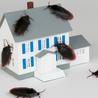 Miller Pest & Termites