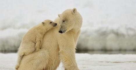 Obrazom: Zamilované zvieratká, ktoré vám zlepšia deň | Milujem prírodu | Scoop.it