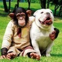 A monkey and a dogs are bosom friends | A dogs help in a man | Scoop.it