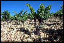 Reportage sur la cave vinicole du Vignoble des 2 Terres à St Felix de Lodez | Tourisme du vin | Scoop.it
