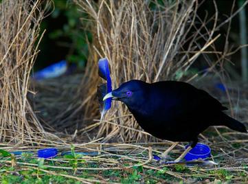 10 espèces avec des rites amoureux stupéfiants | The Blog's Revue by OlivierSC | Scoop.it
