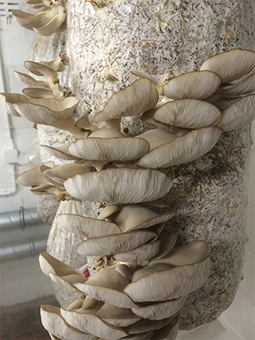 L'UCL suscite une économie solidaire... autour des champignons | UCL Actus Recherche | Scoop.it