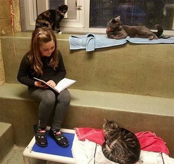 Berks County animal shelter's 'Book Buddies' program is the cutest thing | License to Read | Scoop.it