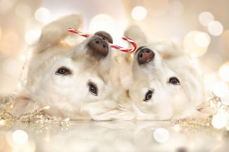 Dog happy with Christmas Day | picturescollections | Scoop.it