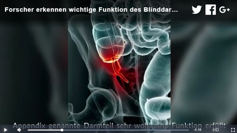 Forscher erkennen wichtige Funktion des Blinddarms | #Research #Medicine #Health | 21st Century Innovative Technologies and Developments as also discoveries, curiosity ( insolite)... | Scoop.it