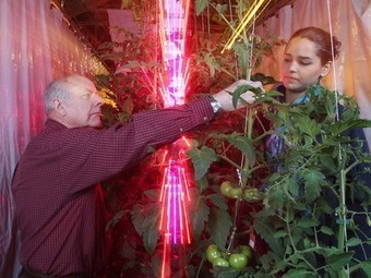 LEDs in greenhouses deliver same yield as grow lights, using just 25% of the energy   Pacific Rim Aquaponics   Scoop.it
