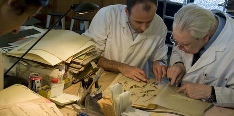 L'herbier du Muséum reprend des couleurs - Le Nouvel Observateur | Narration transmedia et Education | Scoop.it