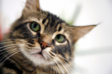 Man admits murder plot, sought to blame cat - Strange But True - NZ Herald News | Feline Health and News - manhattancats.com | Scoop.it