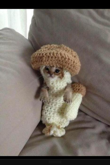 Twitter / mikeybolts: Its a kitten in a knitted ... | Cuddly fluffy awesomeness | Scoop.it
