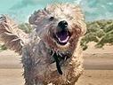 Josh Duhamel: Adopting Was the Smartest Thing I've Done - People Magazine | Celebrity Dogs | Scoop.it