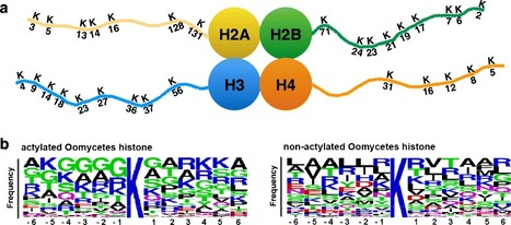 BMC Genomics: Diversity, evolution and expression profiles of histone acetyltransferases and deacetylases in oomycetes (2016)   Plant Pathogenomics   Scoop.it