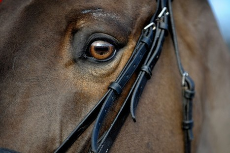 Horses Can Read Human Facial Expressions | Food for Pets | Scoop.it