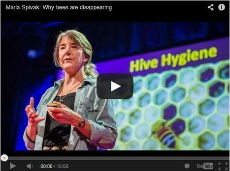Marla Spivak: Why Bees Are Disappearing | Natural Pest Control | Scoop.it
