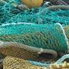 Amocean MeerWissen