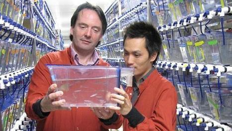 Australian Researchers Discover Hematopoietic Stem Cells Origin | Stem Cells & Tissue Engineering | Scoop.it