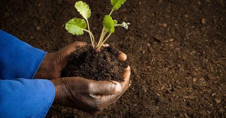 Voici comment les Africains rendent leur sol fertile sans endommager leur terre | Les techniques, l'innovation, la recherche, l'économie et la commercialisation en agriculture | Scoop.it