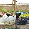 Agricultura y paisajismo