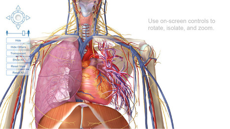 Visible Body 3d Human Anatomy Visible Body