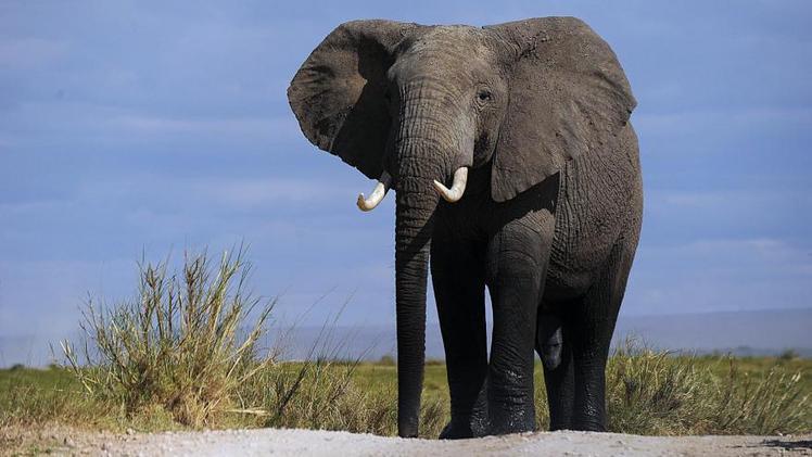 Bientôt deux fois moins d'animaux sauvages sur la planète - DirectMatin.fr