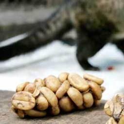 World's priciest coffee comes out of an animal you've never heard of - msnNOW | Coffee Lovers | Scoop.it