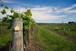 Bilan : l'oenotourisme mondial | OAT | Vins, oenotourisme, wine & passion. | Scoop.it