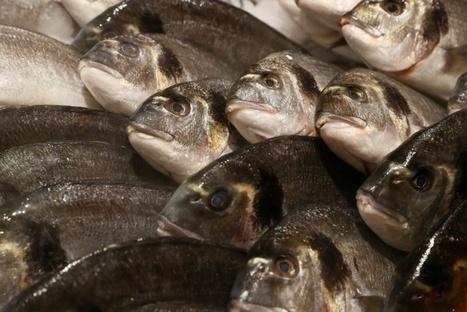 Pêche: l'océan se vide, l'aquarium se remplit | Biodiversité | Scoop.it
