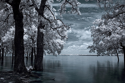 Digital Infrared Photography Tutorial | Great Photographs | Scoop.it