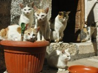 Man divorces wife over her 550 cats | MORONS MAKING THE NEWS | Scoop.it