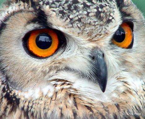 » Superb Owl!   All Geeks   Scoop.it