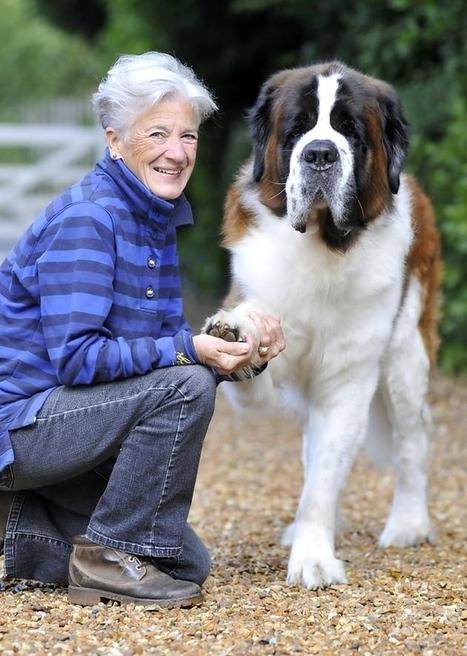 World's Largest Dog Breeds - Huge Dog Breed Nam