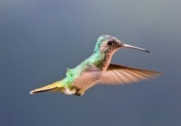 How Will Google Hummingbird Change SEO? | Daily SEO Tip | Social Media & SEO Advice | Scoop.it