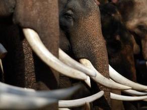 Des éléphants sur Twitter pour lutter contre le braconnage   La veille de generation en action sur la communication et le web 2.0   Scoop.it