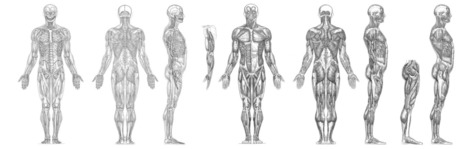 My Muscle Anatomy Reference Hi Rez | Drawing Re...