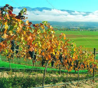 NZ winemakers set for record harvest?   Autour du vin   Scoop.it
