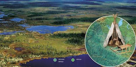 Our Neighbors: The Forest Nenets. Traditional Medicine | Ayahuasca News | Scoop.it