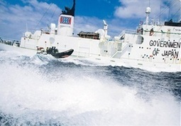 Australian Government's stance on whaling looks weak   OUR OCEANS NEED US   Scoop.it