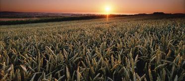 Journée mondiale de l'alimentation : quel futur pour l'agriculture ? (mardi 16 octobre 2012) / Actualité européenne / Législation et réglementation / Actualités / uipp.org / UIPP - Uipp | Génie alimentaire | Scoop.it