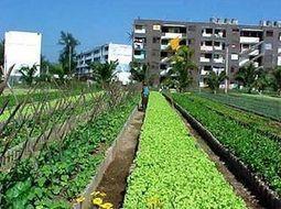 Comment Cuba s'est adapté à la vie sans pétrole | jardins et développement durable | Scoop.it