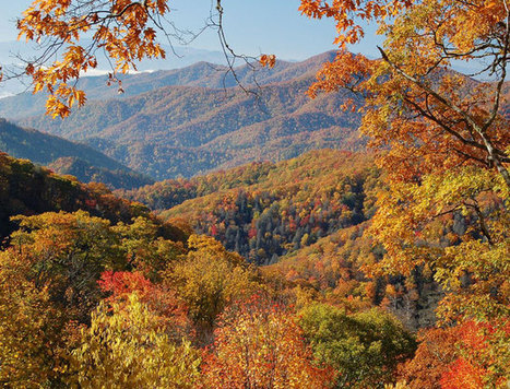 Fall foliage guide | The Miracle of Fall | Scoop.it